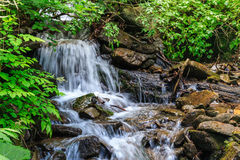 Small waterfall in forest shadow Royalty Free Stock Images