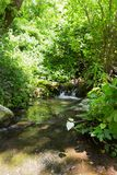 Small waterfall in a forest stream Kziv in the north of Israel royalty free stock image