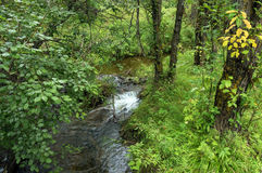 A small waterfall on a forest stream. A small waterfall on small forest streams.Summer day. In the woods royalty free stock photography