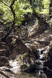 Small waterfall in forest Royalty Free Stock Image