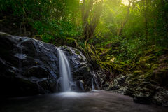 Small waterfall. In the forest and tall tree Stock Photos