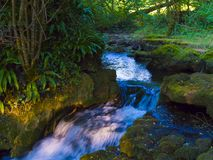 A small waterfall in forest royalty free stock photography