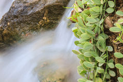 Small waterfall in a garden Royalty Free Stock Photography