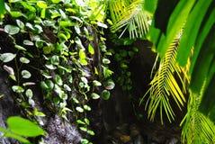 A small waterfall. Among green plants royalty free stock image