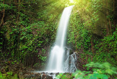 Free Small Waterfall In Jungle Stock Images - 42768744