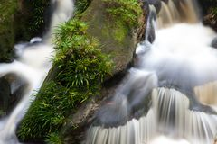 Small waterfall in jungle Stock Photography
