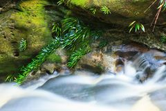 Small waterfall in jungle Royalty Free Stock Image