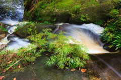Small waterfall in jungle Royalty Free Stock Photo