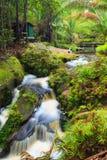 Small waterfall in jungle Stock Photo