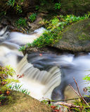Small waterfall in jungle Stock Images