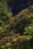 Small waterfall in jungle of Hawaii Royalty Free Stock Images