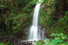 Small waterfall in jungle Royalty Free Stock Photos
