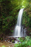 Small waterfall in jungle Stock Image