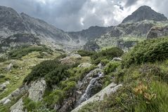 Small waterfall among luxurious alpine vegetation. And white summer clouds in background, in Retezat Mountains, Romania Stock Photography