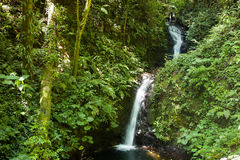Small waterfall in monteverde cloud forest reserve Royalty Free Stock Photo