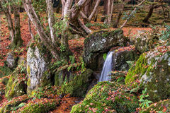 Small waterfall and mossy rock in autumn forest Stock Photo
