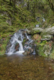 Small waterfall in mossy woodland. Stock Image