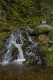 Small waterfall in mossy woodland. Royalty Free Stock Images