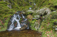 Small waterfall in mossy woodland. Royalty Free Stock Image