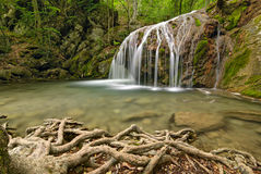 A small waterfall on mountain stream, beautiful roots in the foreground Royalty Free Stock Photography