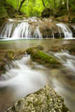A small waterfall on mountain stream, beautiful roots in the foreground Stock Photography