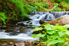 A small waterfall, a mountain stream. Royalty Free Stock Photography