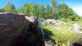 Small waterfall over tiny cliff in summer. Sunshine with vibrant green tree stock video footage