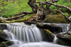 Small waterfall on a peaceful mountain spring. Small waterfall flowing over mossy rocks on a peaceful mountain spring in a lush forest royalty free stock image