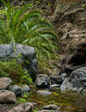 Small waterfall with plants in gorge Stock Photography