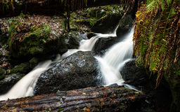 Small Waterfall in the Rain Forest Royalty Free Stock Images