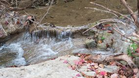 Small waterfall in river, during fall with colorful leaves stock photography