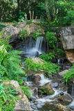 The small waterfall runs and hitting rocks with plants and ferns Royalty Free Stock Image