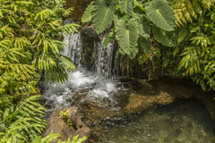 Small waterfall into stream in the woods Royalty Free Stock Photography