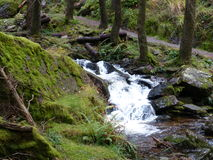 Small waterfall stream in the woods. With a small path next to it Royalty Free Stock Images