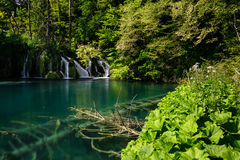 Small waterfall and sunken tree on clear lake in Plitvice Lakes National Park. Small waterfall and sunken trees in the clear lake in Plitvice Lakes National Park Stock Image