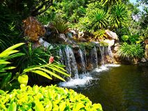 The small waterfall surrounded by a variety of shrubs, which are Royalty Free Stock Photography