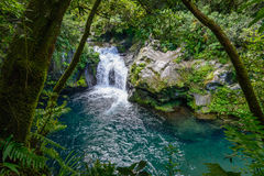 Small waterfall in a tropical forest, la Reunion Stock Photos