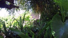 Small waterfall in tropical garden on Nusa Lembongan island, Bali, Indonesia. Green spa scene. Small waterfall in tropical garden on Nusa Lembongan island, Bali stock video