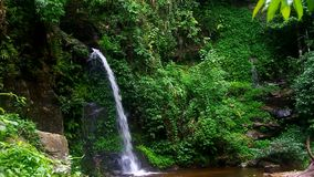 Small waterfall in tropical rain forest. Small waterfall in the dense forest in Chiang Mai, Thailand stock footage