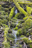 Small waterfall in virgin nature Stock Photo