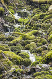 Small waterfall in virgin nature Royalty Free Stock Photo