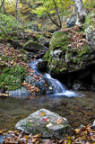Small Waterfall and Water Creek with Fall Maple Leaves Stock Photography
