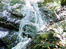 A small waterfall in the wild jungle .  Palawan Island. A small waterfall in the wild jungle . Philippines. Palawan Island stock video
