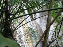 A small waterfall in the wild jungle .  Palawan Island. A small waterfall in the wild jungle . Philippines. Palawan Island stock video footage