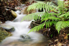Small waterfall in the woods Royalty Free Stock Photos