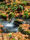 Small waterfalls in autumn Stock Image