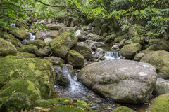 Small waterfalls among green mossy rocks Stock Photography