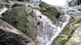 Small waterfalls in the highland rain forest.