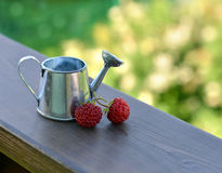 Small watering can with strawberry Royalty Free Stock Photography