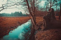 Small waterstream through the woods. stock photos
